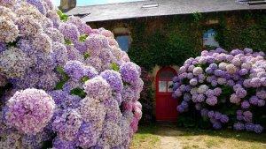 биогумус для цветов