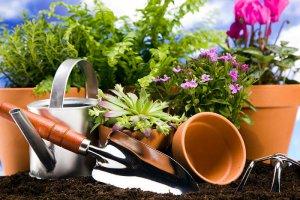 Биогумус для комнатных растений и рассады